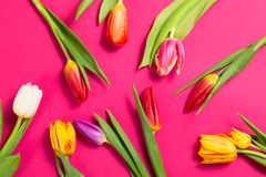 Fiori variopinti dei tulipani su fondo porpora Mothersday o concetto della molla Immagini Stock Libere da Diritti