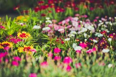 Fiori variopinti del giardino Fotografie Stock