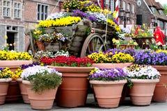 Fiori variopinti della molla in vasi da fiori Fotografia Stock Libera da Diritti