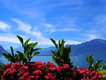 Fiori variopinti di bellezza su passeggiata nella città di MONTREUX al lago Lemano in SVIZZERA Immagine Stock