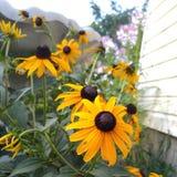 Fiori variopinti di estate fotografia stock libera da diritti