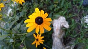 Fiori variopinti di estate in giardino immagini stock