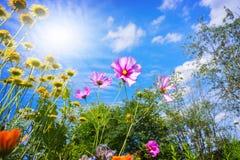 Fiori variopinti e cielo blu Fotografia Stock