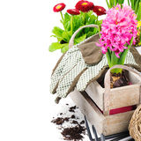 Fiori variopinti e strumenti di giardino Fotografia Stock Libera da Diritti