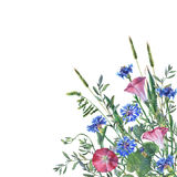Fiori variopinti ed erba della molla su un prato illustrazione vettoriale