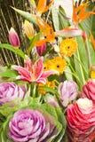 Fiori variopinti in fioritura Fotografia Stock Libera da Diritti
