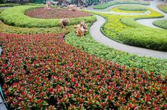 Fiori variopinti gialli del bello primo piano nei parchi verdi all'aperto fotografia stock
