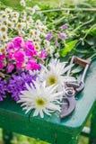 Fiori variopinti meravigliosi nel giardino di estate Immagini Stock Libere da Diritti