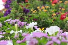Fiori variopinti nel giardino di miracolo del Dubai Fotografia Stock Libera da Diritti