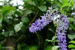 Fiori variopinti nel giardino Fioritura del fiore fotografie stock libere da diritti