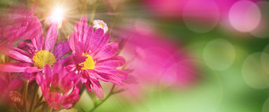 Fiori variopinti in primavera Fotografia Stock
