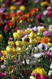 Fiori variopinti in primavera per fondo o il modello Immagini Stock