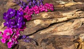 Fiori variopinti su legno Fotografia Stock Libera da Diritti