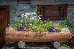Fiori variopinti in un tronco di legno, le alpi Francia Fotografia Stock Libera da Diritti