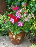 Fiori variopinti in un vaso; petunia; geranio; nicotiana Fotografia Stock