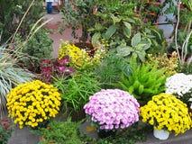 Fiori variopinti in vasi al negozio di fiore Fotografia Stock