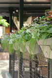 Fiori in vasi da fiori in una fila Fotografia Stock