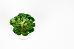Fiori verdi, contesto bianco Immagine Stock