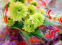 Fiori verdi del crisantemo con i fiori viola del crisantemo Immagine Stock Libera da Diritti