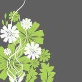 Fiori verdi e bianchi Fotografia Stock