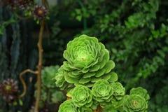 Fiori verdi esotici Immagine Stock