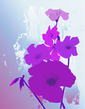 Fiori viola Fotografia Stock