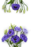 Fiori viola Fotografia Stock Libera da Diritti