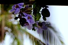Fiori viola Fotografie Stock