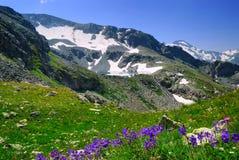 Fiori viola contro lo sfondo della montagna Fotografie Stock