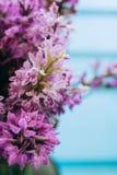 Fiori viola del maculata della dactylorhiza Fotografie Stock Libere da Diritti