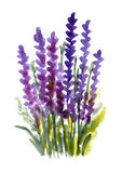 Fiori viola dell'acquerello Immagine Stock Libera da Diritti