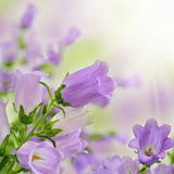 Fiori viola di estate della sorgente sulla priorità bassa del bokeh Fotografia Stock