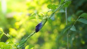 Fiori viola freschi del crake Fotografia Stock