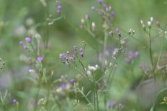 Fiori viola nel giardino fotografie stock libere da diritti