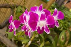 Fiori viola variopinti dell'orchidea Immagini Stock Libere da Diritti