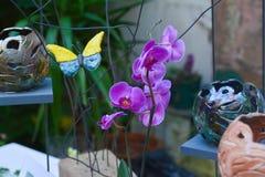 Fiori viola variopinti dell'orchidea Fotografie Stock