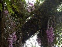 Fiori viola variopinti dell'orchidea Immagine Stock