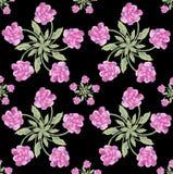 Fiorisca i fiori della peonia su una carta da parati senza cuciture dell'acquerello variopinto nero del fondo Fotografia Stock