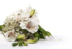 Fiorisca il Alstroemeria bianco Fotografie Stock Libere da Diritti