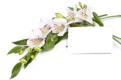Fiorisca il Alstroemeria bianco e la scheda per il vostro testo Fotografia Stock Libera da Diritti