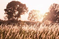 Fiorisca il campo di erba in foresta tropicale con la luce del tramonto Immagine Stock