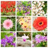 Fiorisca il collage del fournieri di Torenia, di salvia splendens, di Gerber e dell'orchidea Immagini Stock