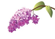 Fiorisca il fondo, fiori bianchi su un fondo rosa Fotografia Stock Libera da Diritti