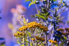 Fiorisca il fondo giallo, bianco, il mazzo, pianta, Fotografie Stock
