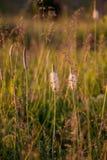 Fiorisca il fondo giallo, bianco, il mazzo, pianta, Fotografia Stock