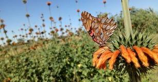 Fiorisca il paese selvaggio arancio della pianta verde della formica della farfalla immagini stock libere da diritti