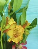 Fiorisca la bellezza di fioritura decorativa su un fondo di legno di colore, struttura di disposizione di alstroemeria del mazzo Immagini Stock Libere da Diritti