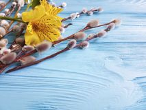 Fiorisca la stagione di alstroemeria, salice del ramoscello di aprile su un fondo di legno blu Fotografie Stock