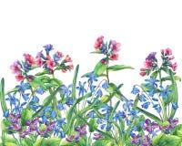 Fiorisca la struttura blu delle viole, del lungwort e del bifolia fragranti di Scilla royalty illustrazione gratis
