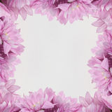 Fiorisca la struttura di progettazione - tema con i fiori rosa Fotografia Stock Libera da Diritti